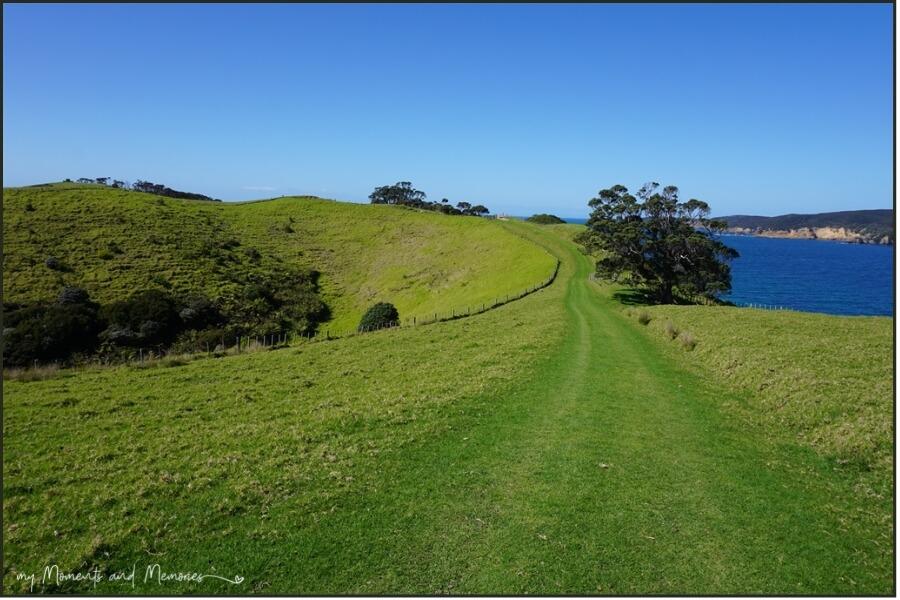 North South track Tawharanui