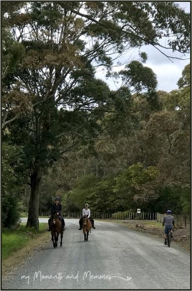 Riding the Matakana Cycle Trail
